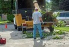 Agnes Tree cutting services 13
