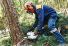 Agnes Tree felling services 21