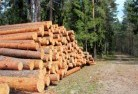 Agnes Tree felling services 31