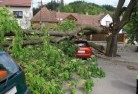 Agnes Tree felling services 41